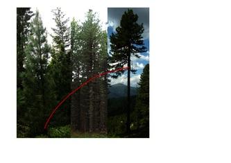 Abbildung2_Langmaier.jpg © Langmaier