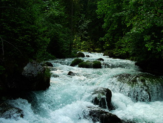 Wald-Wasser © Josef Krogger