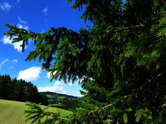 Wald © Maierhofer