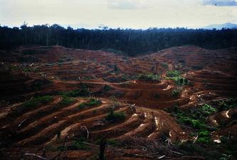 Umwandlung von Wald in landwirtschaftliche Plantagen © red