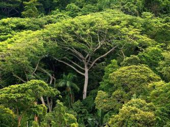 Bäume können das Klima retten © Ralf Hischberg