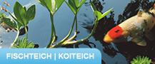 Fischteich-Koiteich © Archiv