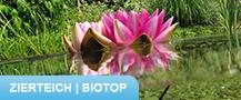 Zierteich-Biotop © Archiv