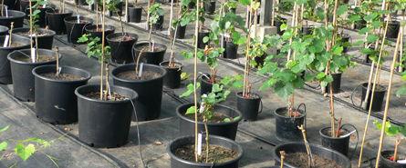 Bewaesserungssysteme Gewerblicher-Gartenbau © Archiv