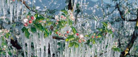 Agrarbewaesserung Frostschutzbewaesserung © Archiv